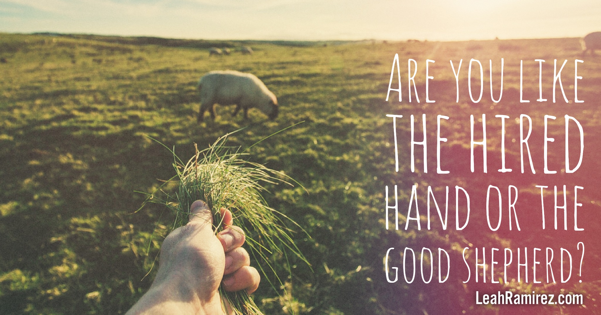 A Hired Hand or a Good Shepherd?