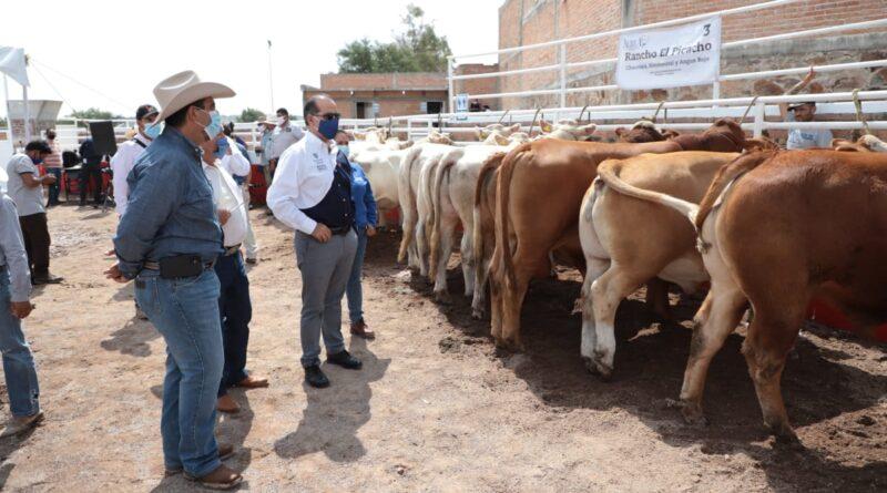 ALIANZA ESTRATÉGICA ENTRE GOBIERNO ESTATAL, MUNICIPIOS DEL INTERIOR Y PRODUCTORES HA DINAMIZADO SECTOR AGROPECUARIO