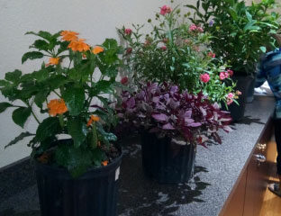 January 2019 Monthly Meeting of the Garden Club of Cape Coral Photos
