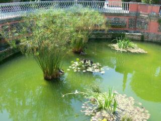 WaterGardens1