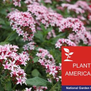 Plant America Cape Coral Garden Club Continuing Education Photo of Pentas