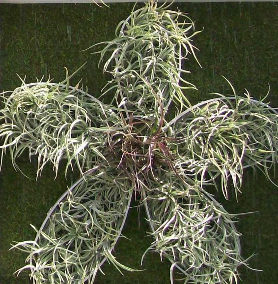 Air plant part of pattern