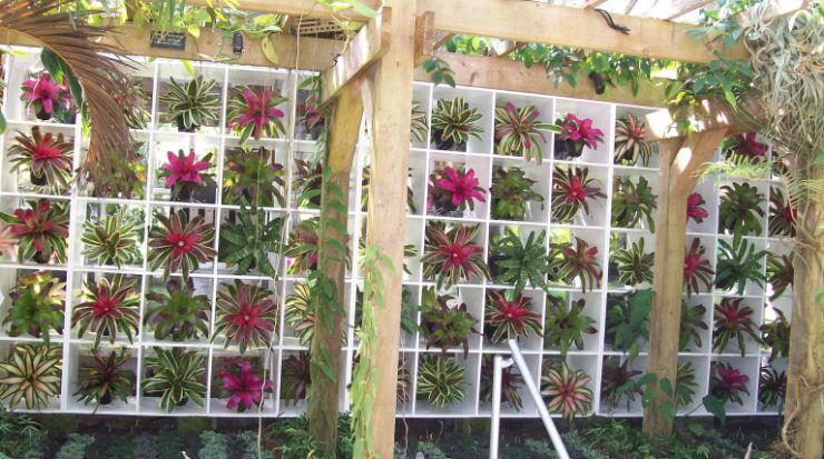 Bromeliad Exhibit Conservatory Inside