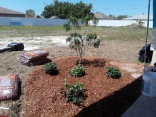 Habitat For Humanity Garden Club of Cape Coral