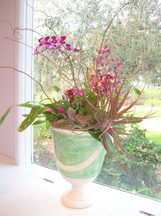 Orchid Bromeliade display