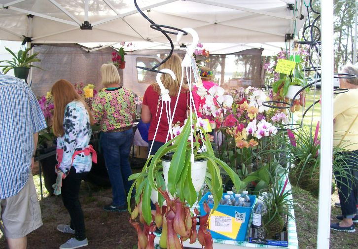 Orchid Seller