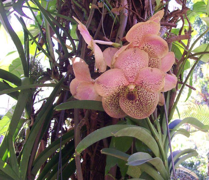 Orchid Speciman