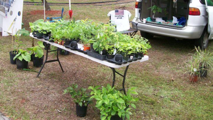 Plant Vendor Herbs