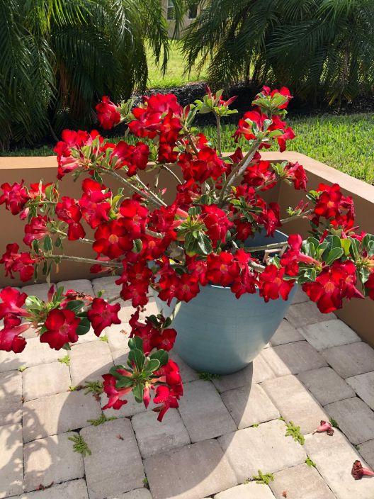 Red Blooming Flowers - Ann Block