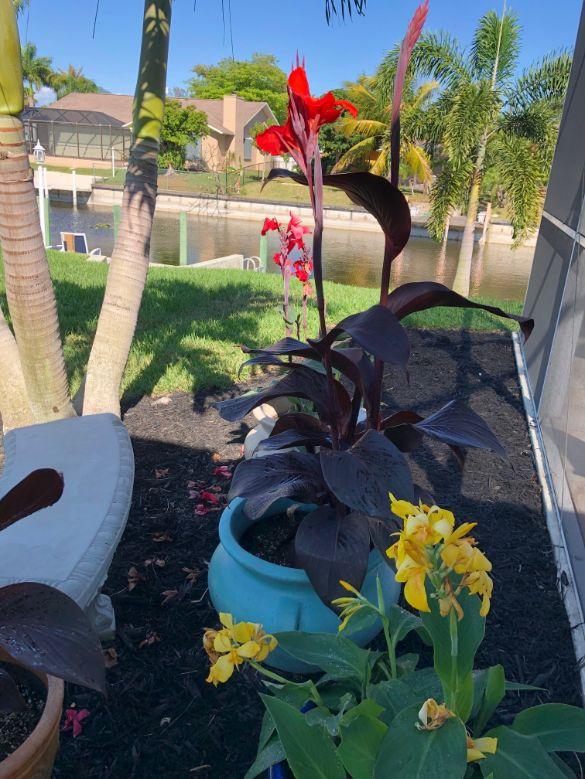 Blooming Flowers - Ann Block