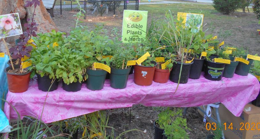 Edible Plants and Herbs