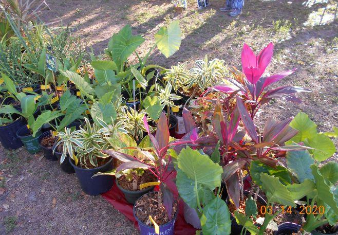 Large Plants on Red Carpet