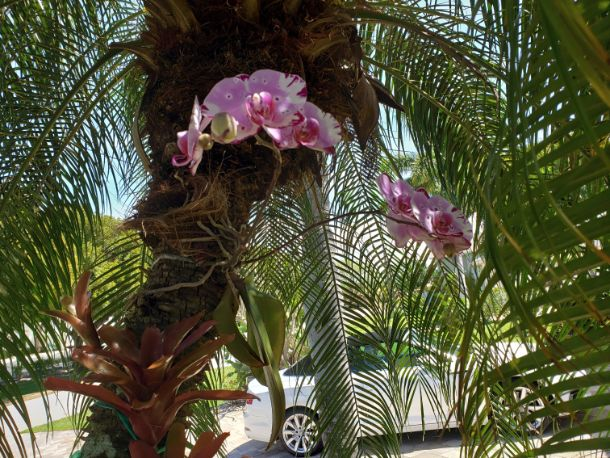 Orchid Donna Schneider
