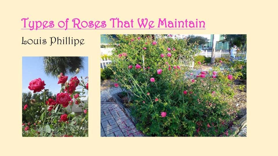 October Meeting 2020 - Rose Garden - 11