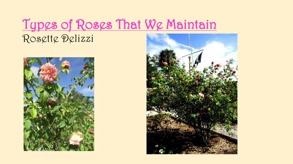 October Meeting 2020 - Rose Garden - 13