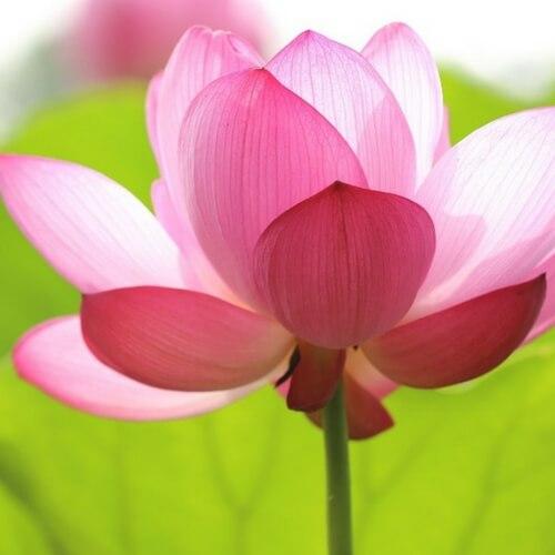 Emotional Freedom and Meditation