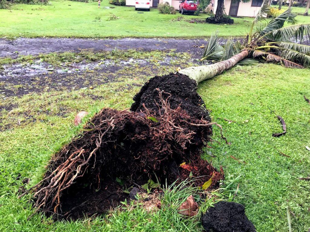 Fallen Tree from Cyclone Gita