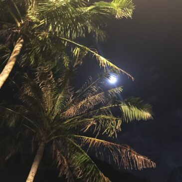 Steamy Pago Pago Nights