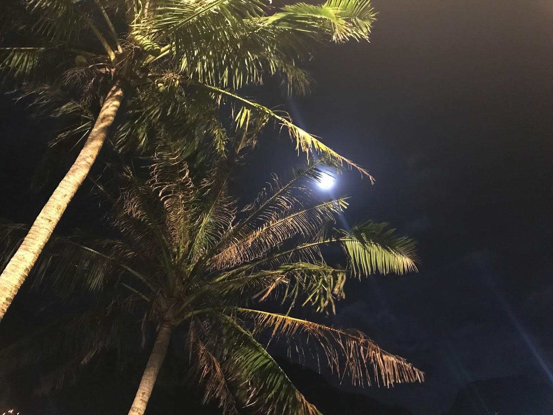 Pago Pago Moon Behind a Coconut Tree