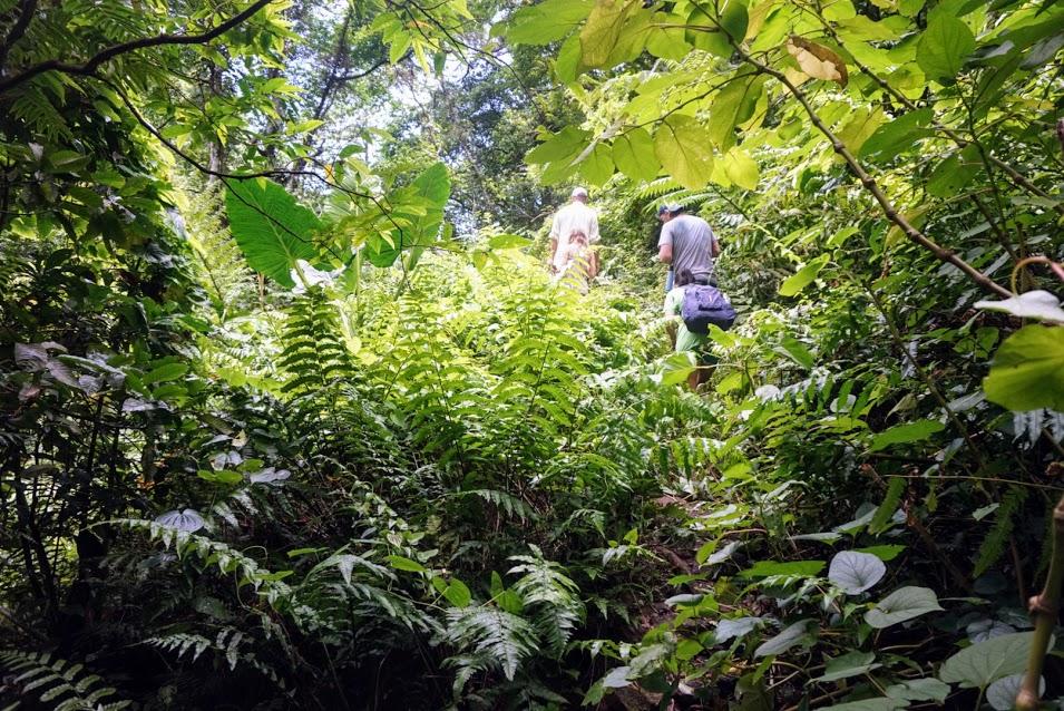 Trail to Nu'uuli Falls
