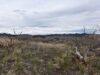 cheap-land-for-sale-in-cotopaxi-co