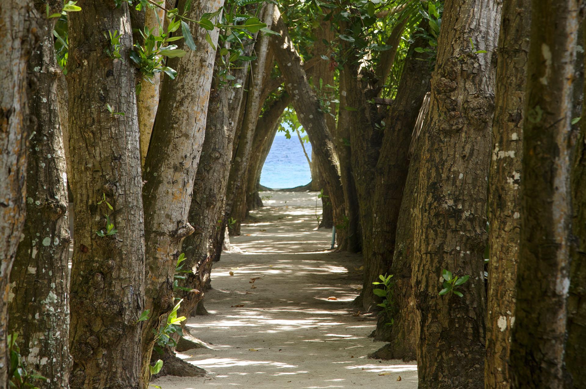 Embudu-Village-Walkway