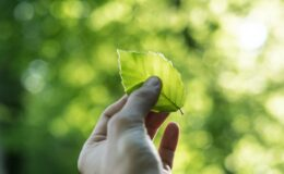 person showing green leaf
