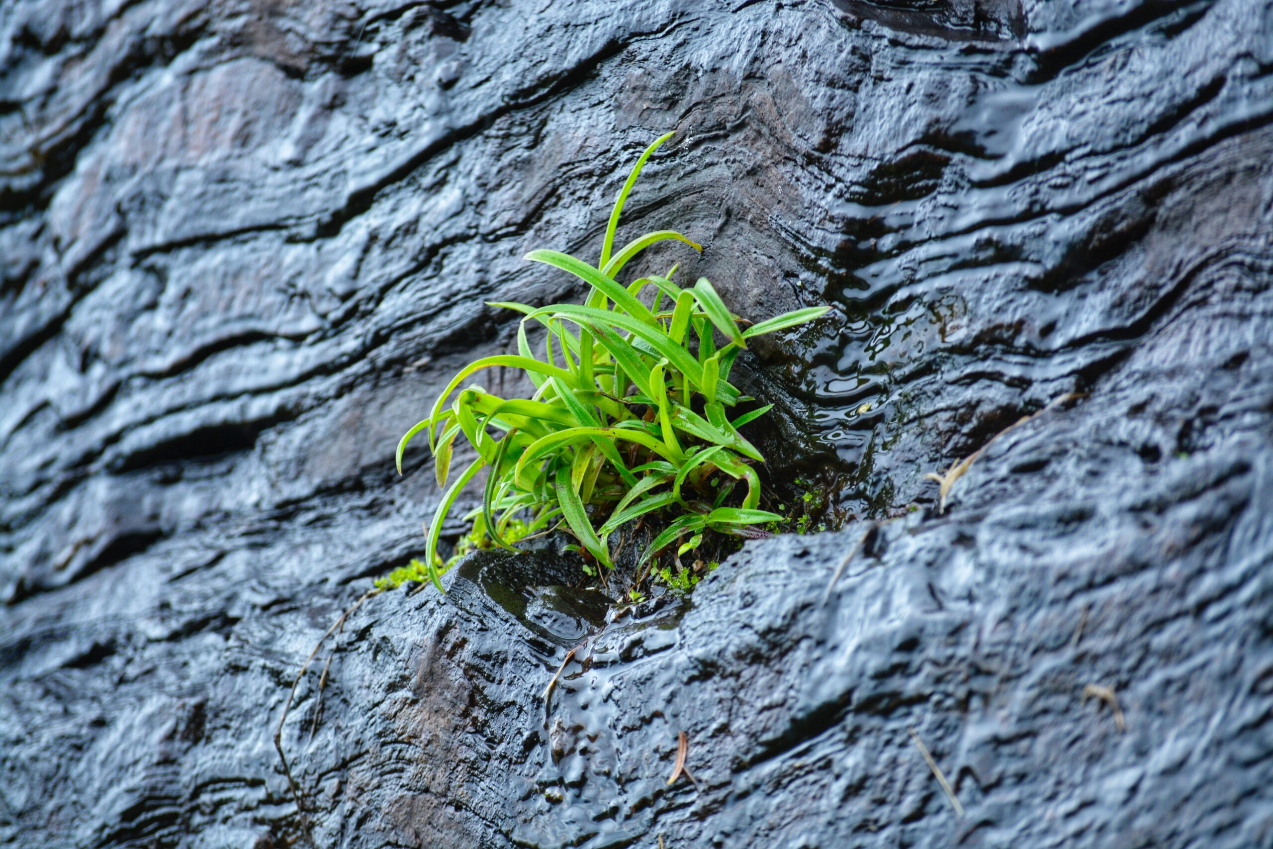 green plant on black surface
