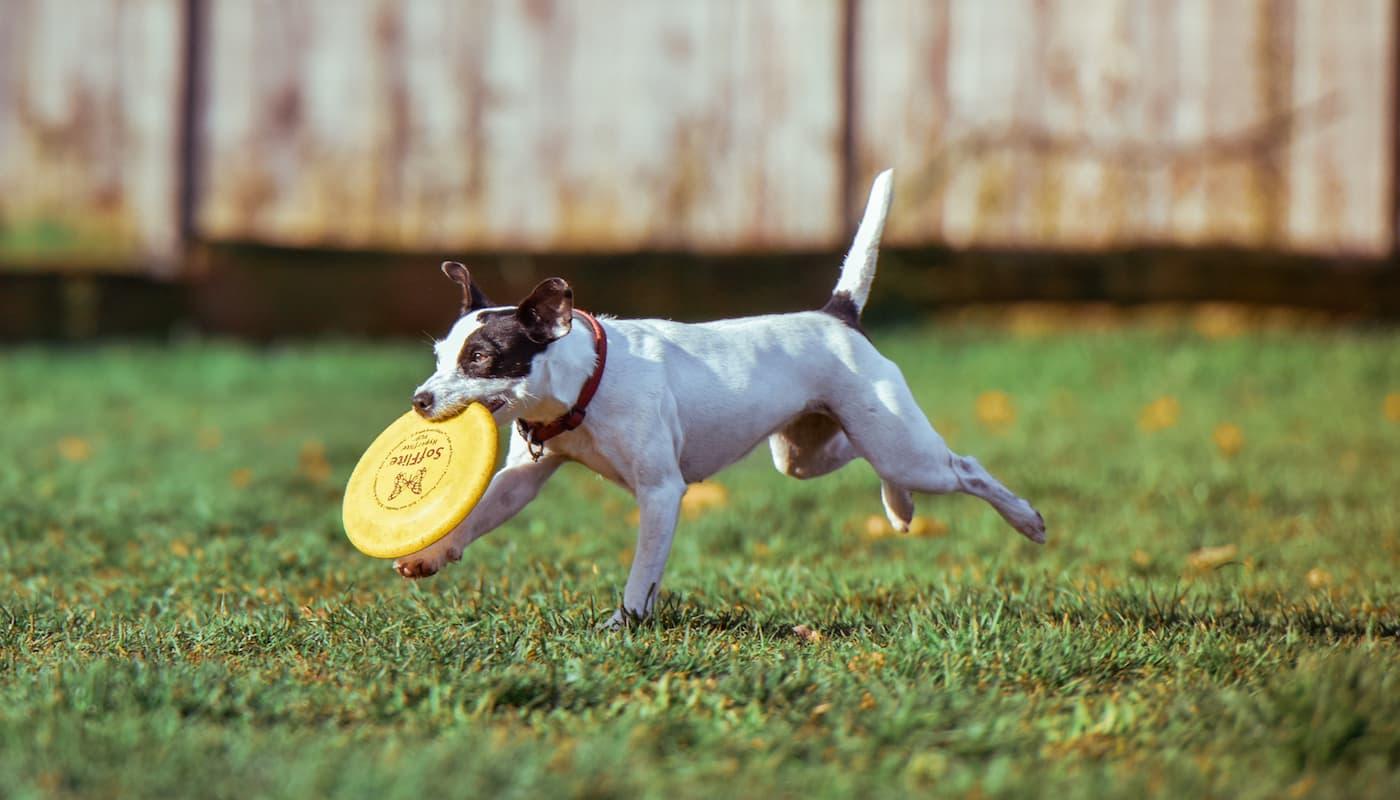 Provincetown Dog