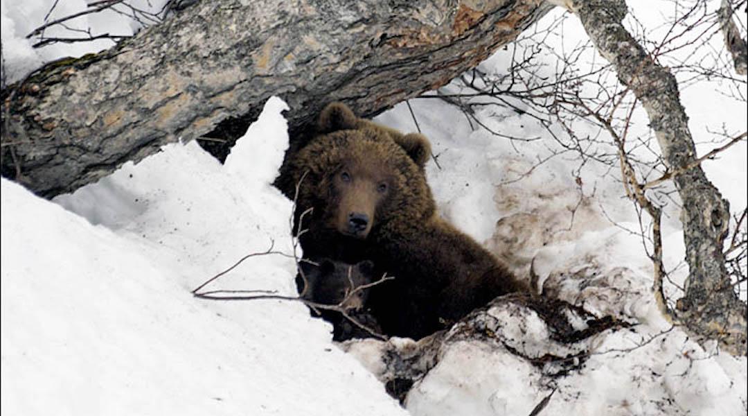 Out of Hibernation Bear Weekend 2021