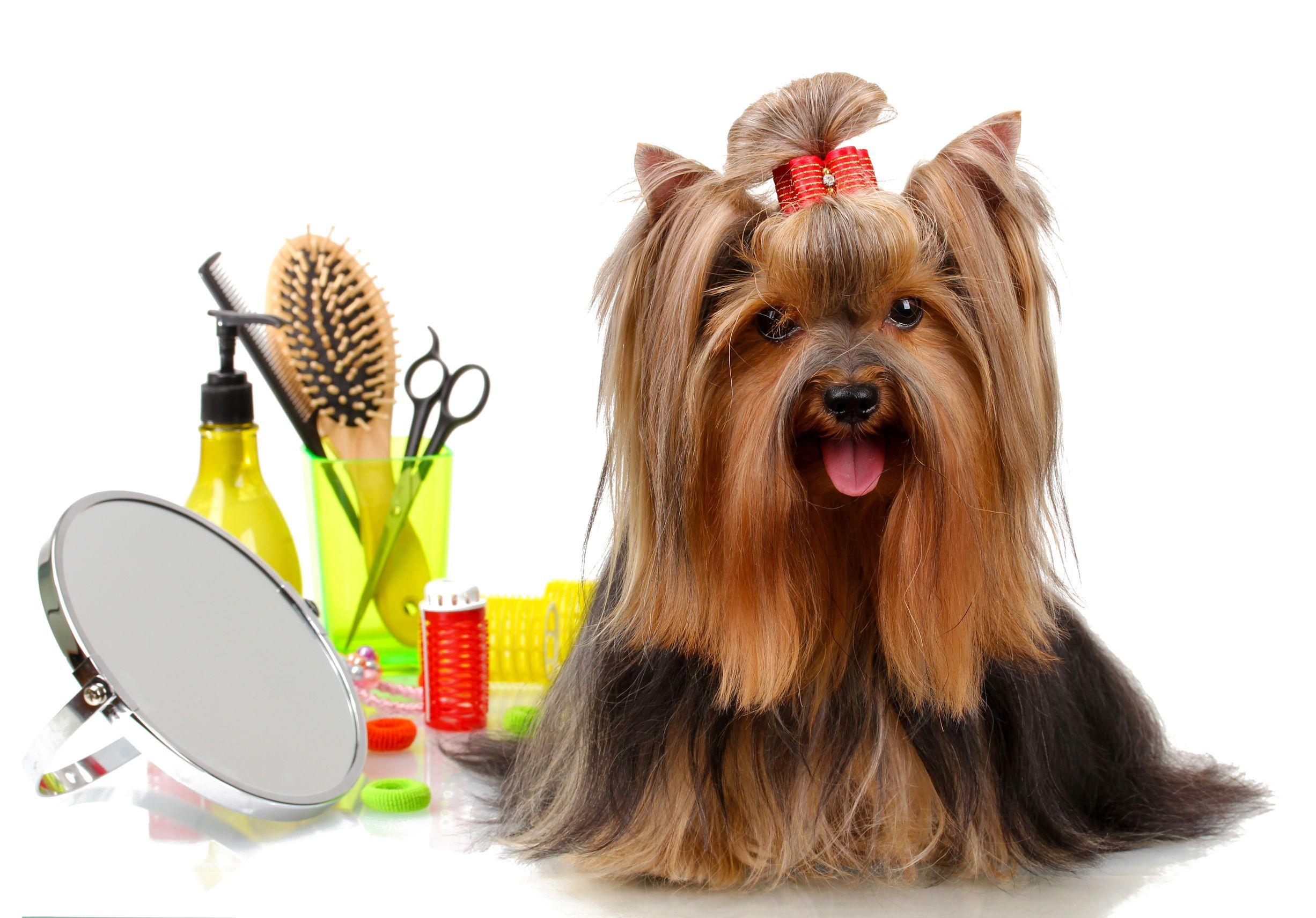 Dog-grooming-No.1