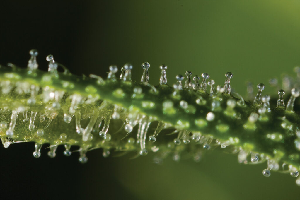 phytocannabinoids-properties-boiling-points