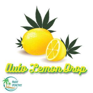 autoflower-super-lemon-haze-lemon-drop-feminized-cannabis-seeds