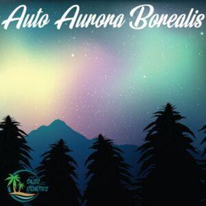 autoflower-northern-lights-strain-aurora-oasis