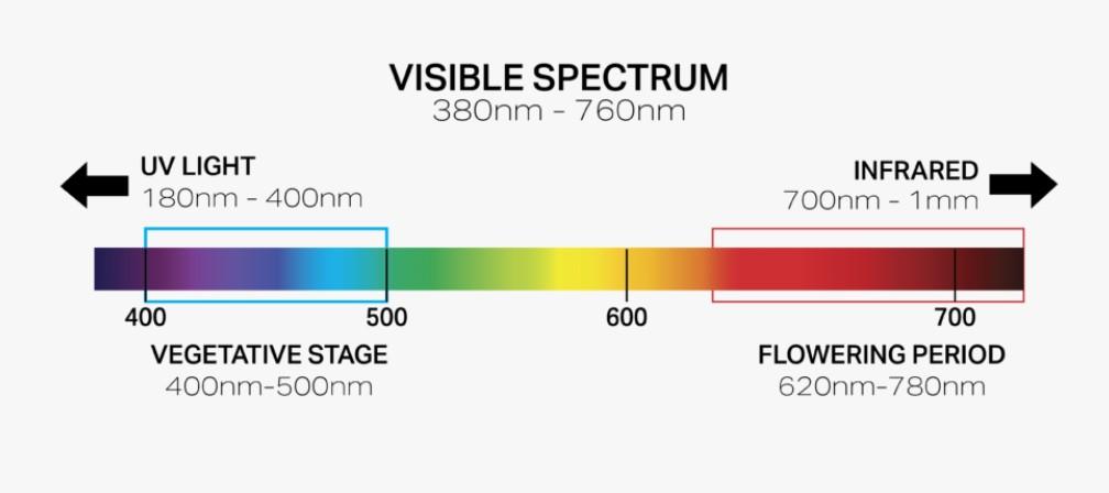 light-spectrum-vegetative-flowering