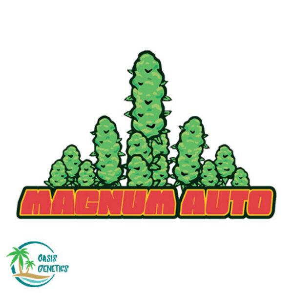 auto-flower-magnum-strain-feminized-cannabis-seeds