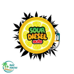 sour-diesel-auto-oasis_3