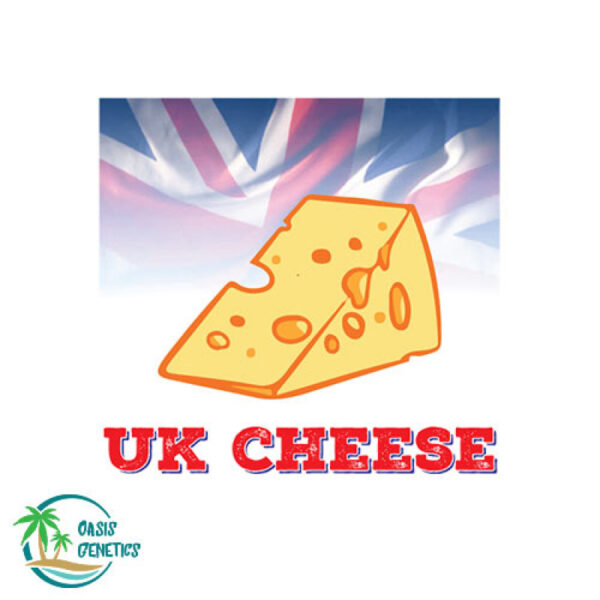 uk-cheese-strain-oasis-seeds
