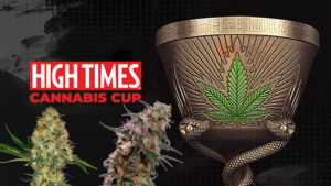 what-is-the-cannabis-cup-explained