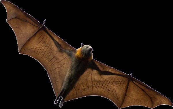 bat-guano-super-soil-additive
