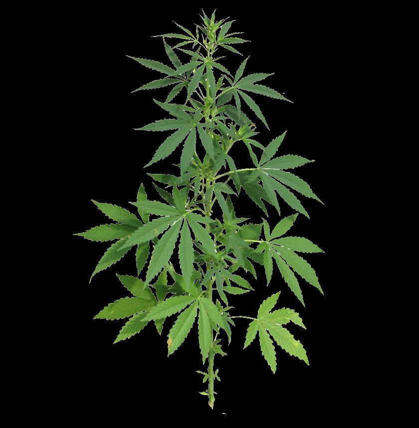 cannabis-plant-growing-in super-soil-diagram