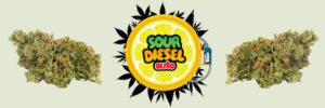 sour-diesel-strain-review-effects-growing-tips-medical-conditions