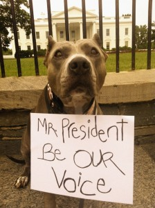 """""""Mr. President Be Our Voice""""-Angel"""