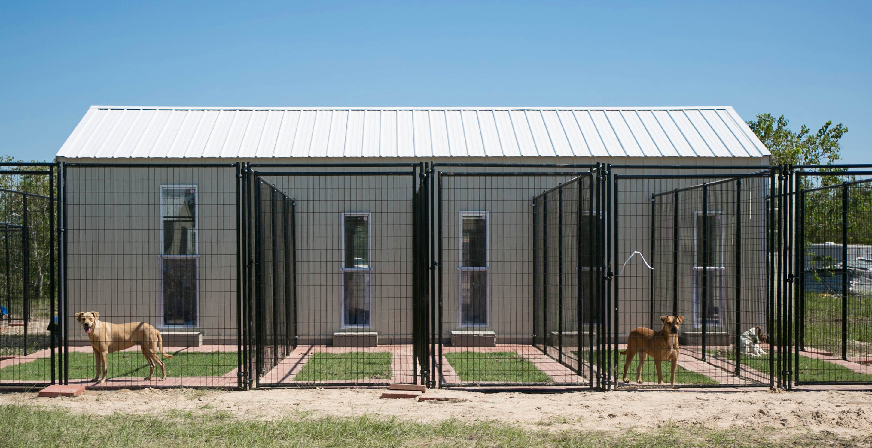 Katy Dog Suites: Luxury dog boarding kennels with private grassed backyards