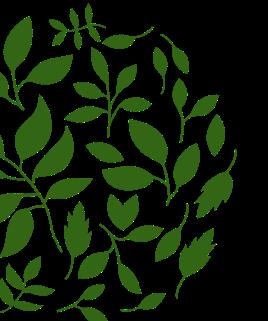 Pngtree—minimalistic-nature-hand-drawn-green