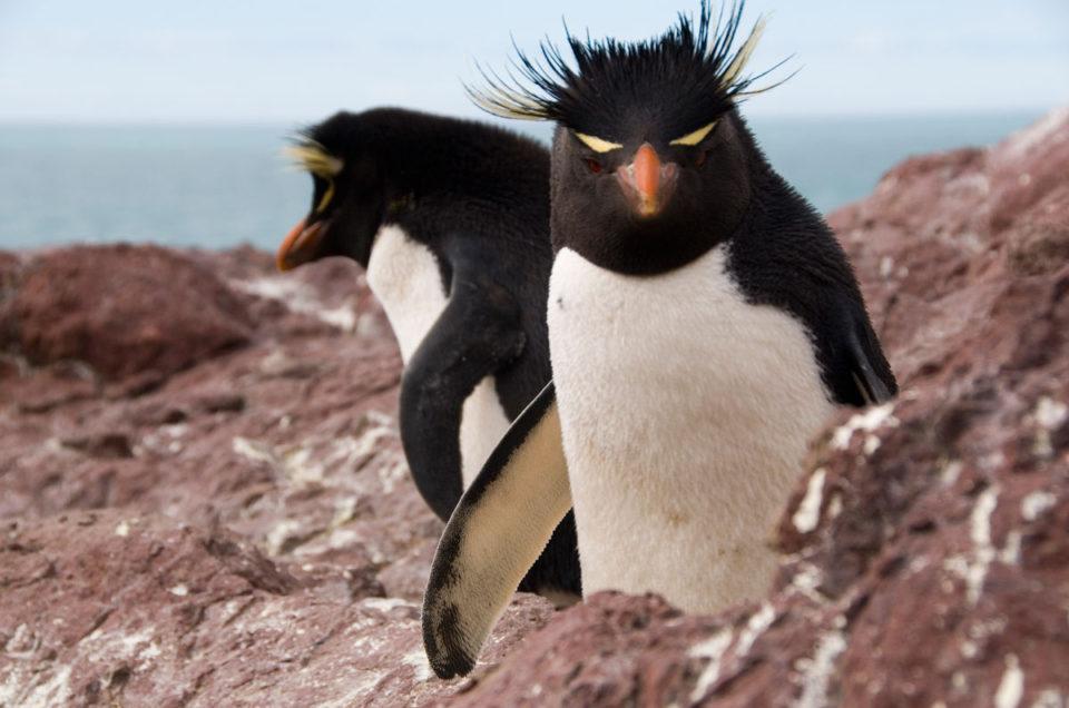 A fauna da ilha