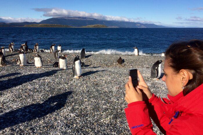 Combinada pingüinera (Navegação e Land)