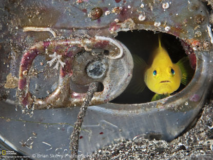 © Brian Skerry Photography. All rights reserved. Used with permission.