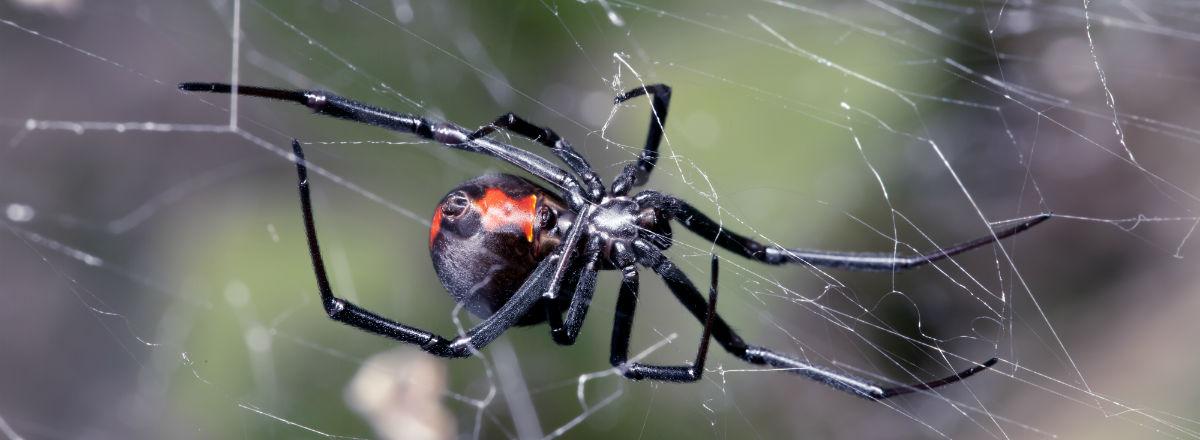 Orlando Florida Spider Control Exterminator