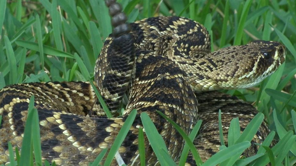 Snake Prevention in Orlando Florida